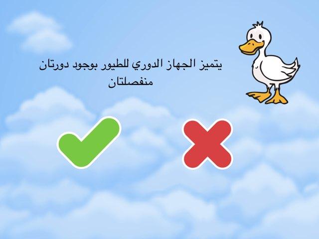 الطيور  by Shaimaa Mohammed