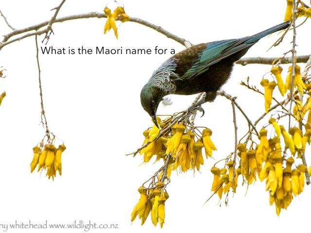 Maori Birds by Matt Johnston