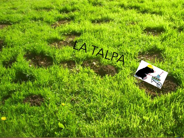 La TALPA by Adriano Scotti