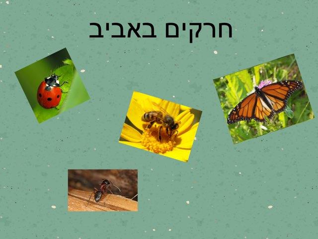 חרקים באביב by Gal Maor