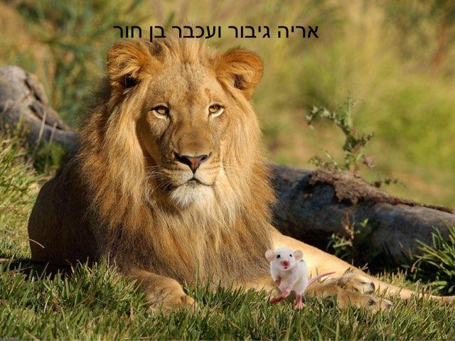 האריה והעכבר by Liora Peer