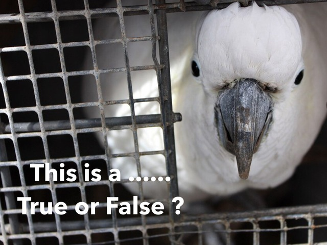 "Animals Pets -True or False - ""This is a (noun)"" Grammar  - Cambridge Starters Pre A1 ESL EFL EAL Copy  by Teeny Tiny TEFL"