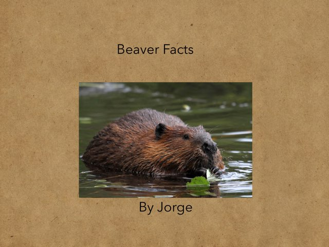 Beaver Facts  by Hulstrom 1st Grade