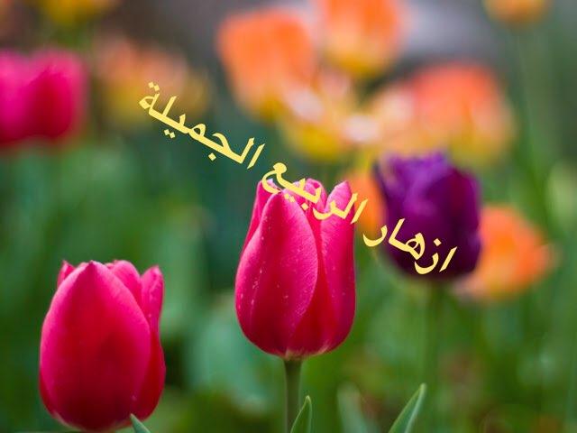 لعبة الربيع by Tahrir Halag