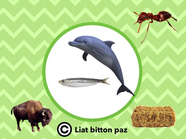 Animals And Their Food - Part 3 by Liat Bitton-paz