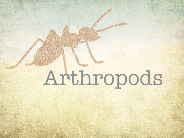 Arthropods  by Katelynn Dorn
