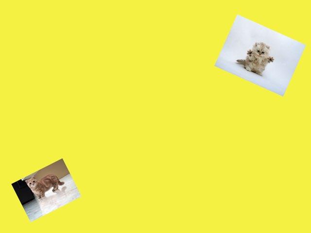 Videos De Animales!!! by Lucia Rumbo Lago