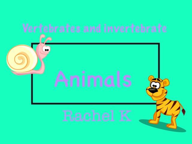 Vertebrates And Invertebrates by Rachel Koon