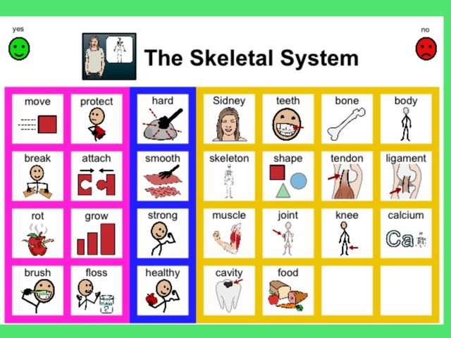 January Unique Unit Chapter 5: The Skeletal System- Sight Word Find  by Tanya Folmsbee