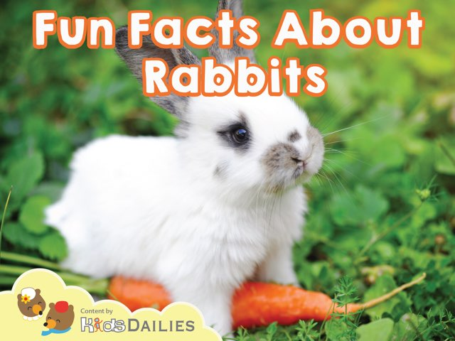 Fun Facts About Rabbits by Kids Dailies