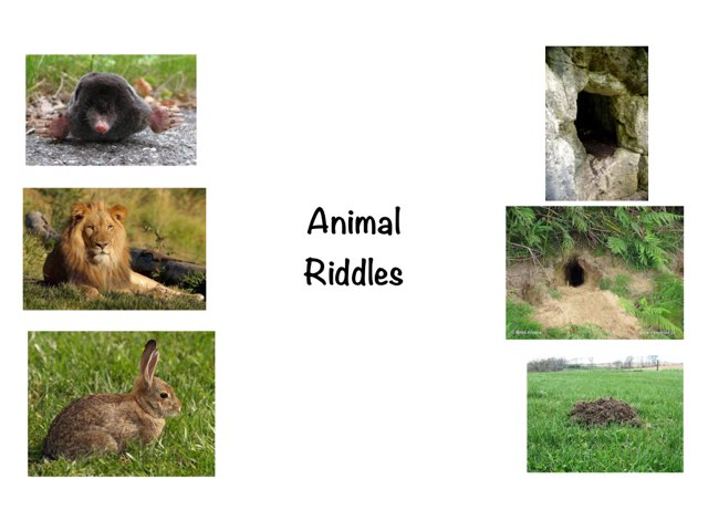 Animal Homes Riddles by So Solo