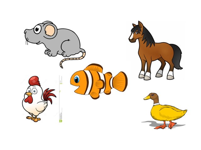 Animals by Amoon Ali
