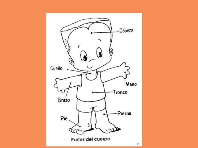Partes Del Cuerpo by Luchi Lu