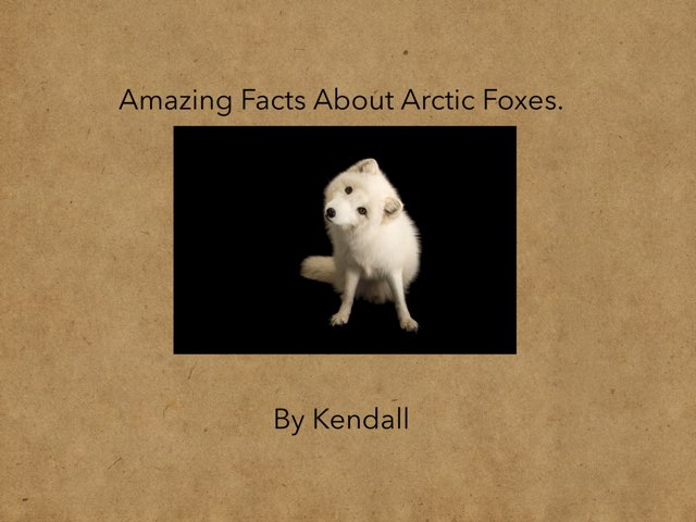 Arctic fox By Kendall by Hulstrom 1st Grade