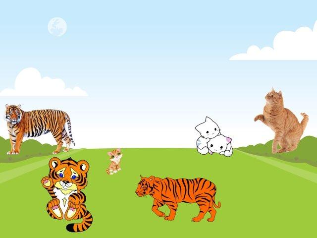 Group 1: Animals by Siti Fatimah