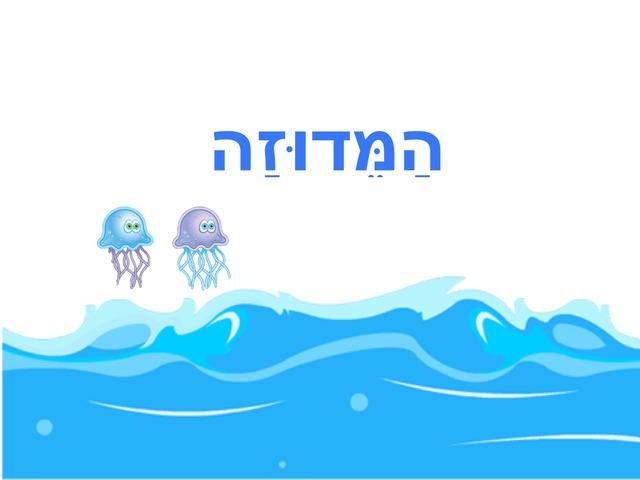 המדוזה by ספיר בירנבאום