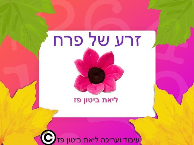זרע של פרח   גינה  by Liat Bitton-paz