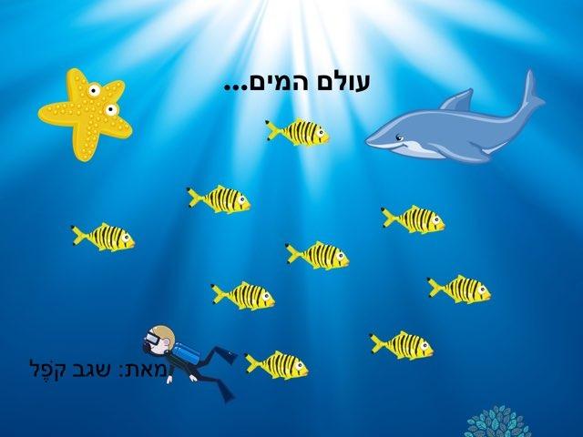 משחק 270 by Galit Gershom