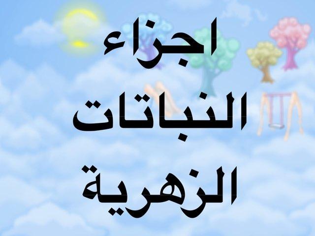 لعبة 36 by Reem Alsulaiti