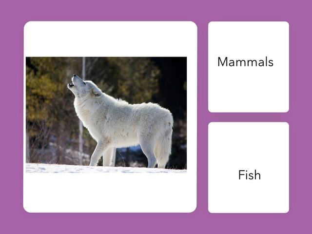 BA 24 Arctic Fox Quiz Stella Laura by Bilingual Adventure
