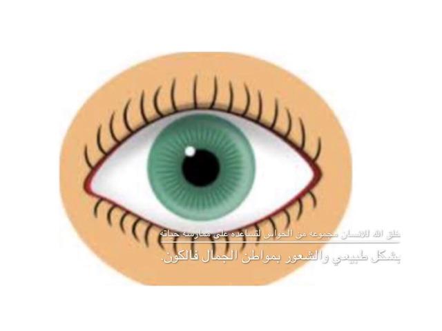 حاسة البصر  by עליה בדר