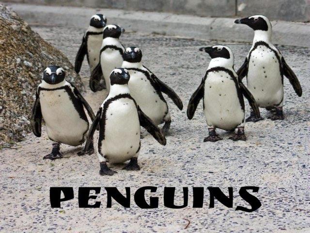 Penguins by Melodi Kunn