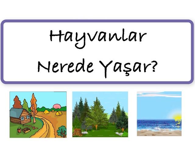 Hayvanlar Nerede Yaşar? by Hadi  Oyna