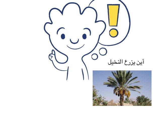 النخيل by ريم الخليفي