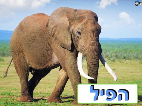 חיות  הבר הפילים by Liat Bitton-paz