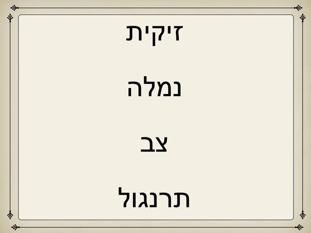 א זיקית by ברית זילברמן
