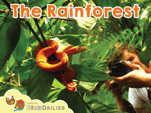 Rainforest by Kids Dailies