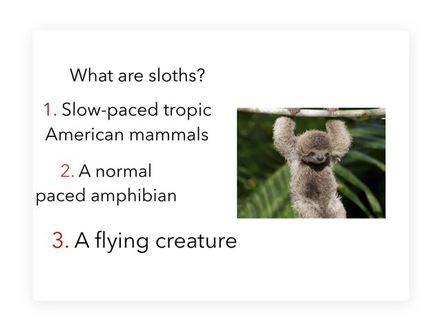 Sloth Trivia by Isabella Sill