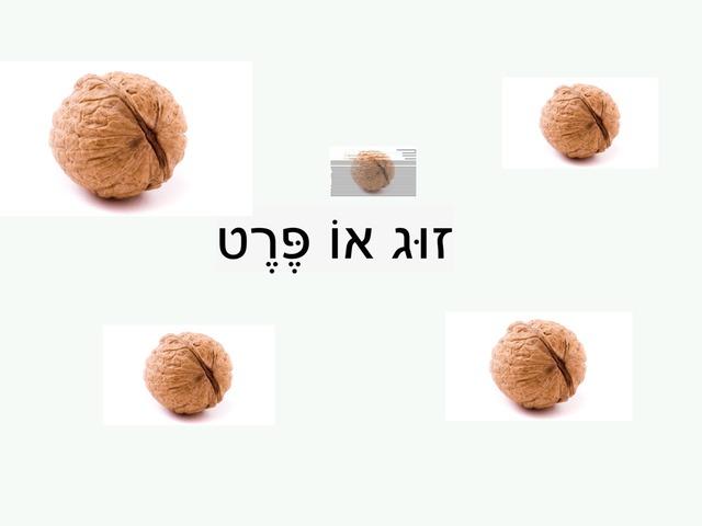 זוג או פרט by ירדן אהרון