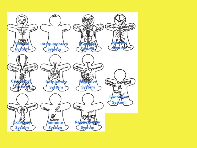 DPISD Body Systems With Sound by Marla Chandler
