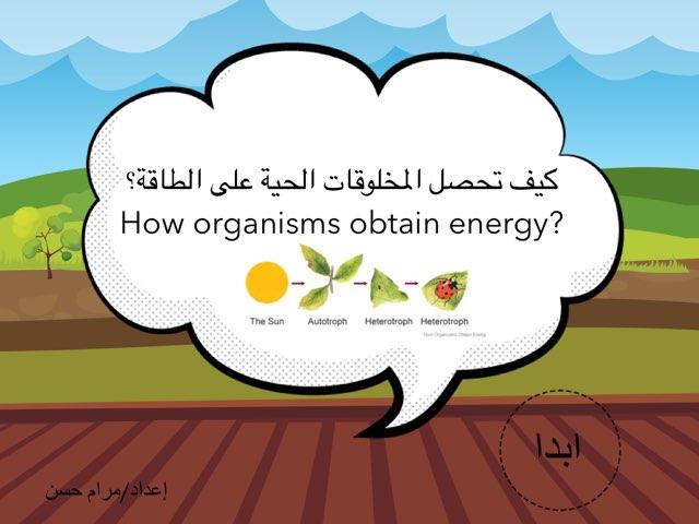 كيف تحصل المخلوقات الحية على الطاقة by Maram Hassan