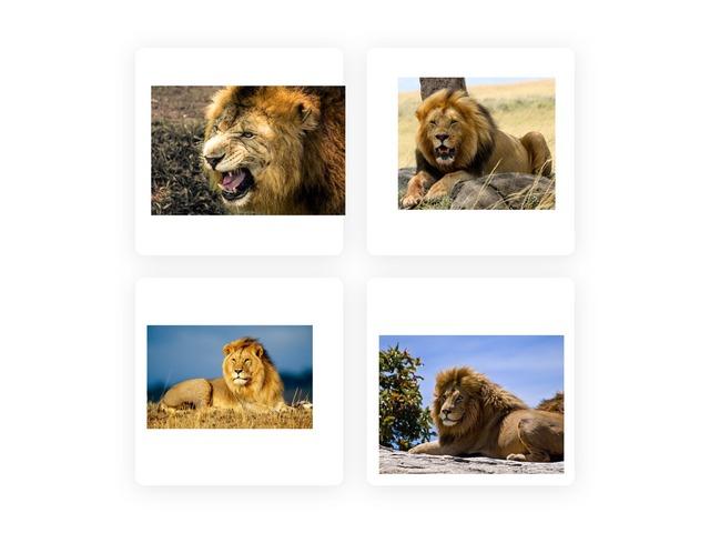 Lion by Ariel Ferdman