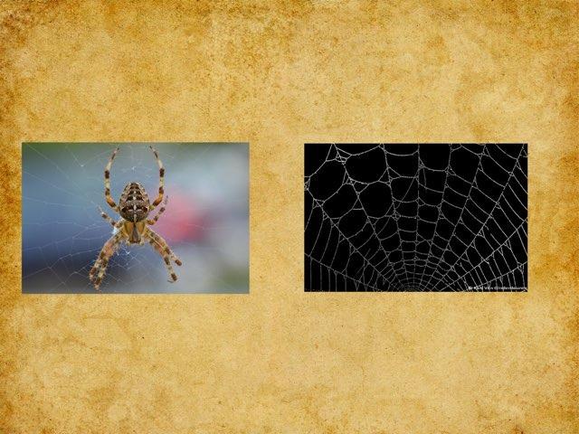 Kortste Langste Woord Herfst Spinnen by Elke Laenen