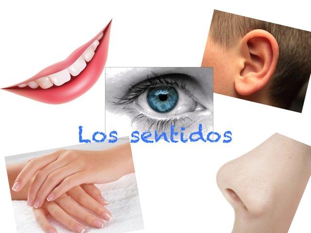 Los Sentidos by Aidee Cuellar