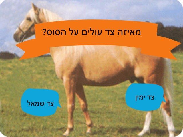 סוסים  ליאור ואור by בית ספר קישון