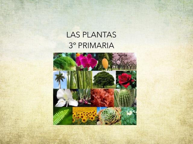 Las Plantas by Javier Lázaro Carrasco
