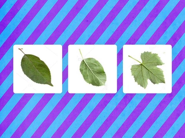 التشابه والاختلاف بين أوراق النباتات by Fatma Al-Ameer