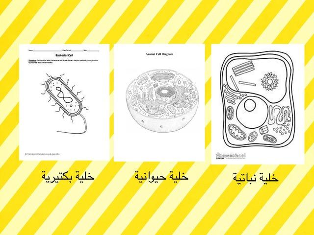 تنوع الخلايا by Teacher OfBiology