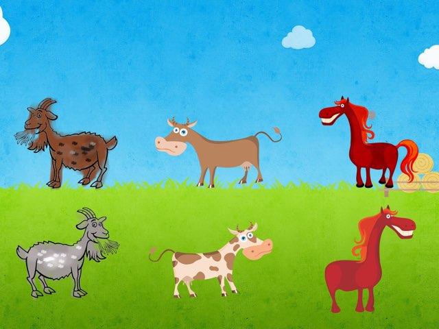 התאמת  בעלי חיים לבני זוגם by גלי דקל