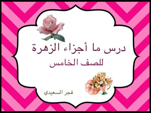 ما هي اجزاء الزهرة؟!  by Fajer Alsaeedi