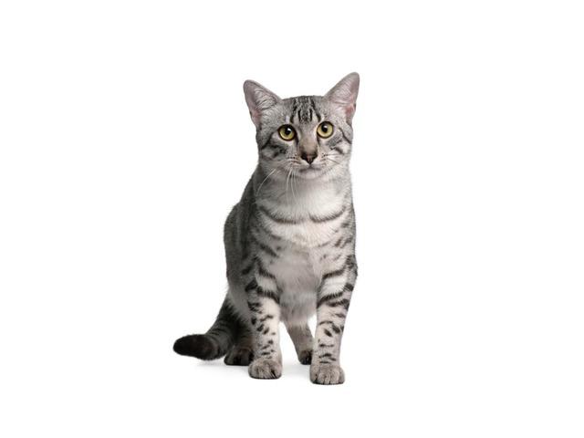 חתול by המרכז הטכנולוגי בית איזי שפירא