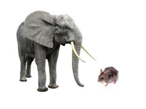 Big Or Small Animal by Madonna Nilsen