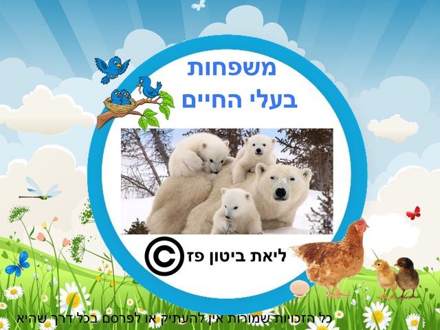 משפחות בעלי חיים by Liat Bitton-paz