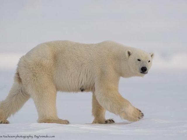 סוגי דובים by Adi Avraham