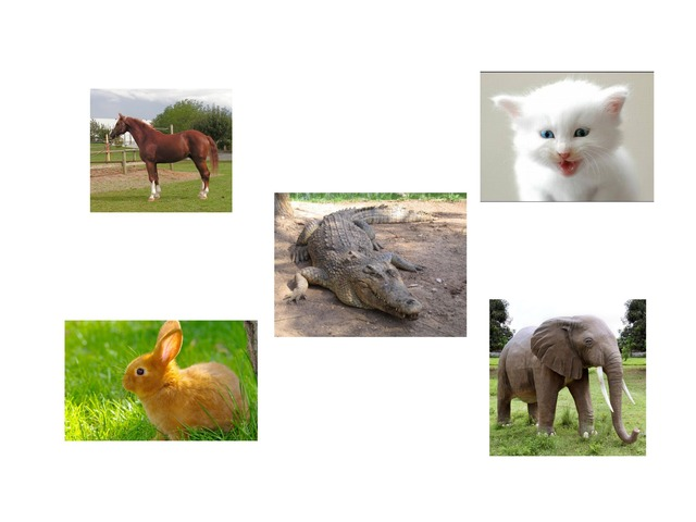 الحيوانات الفقارية by Alhaneen Amal