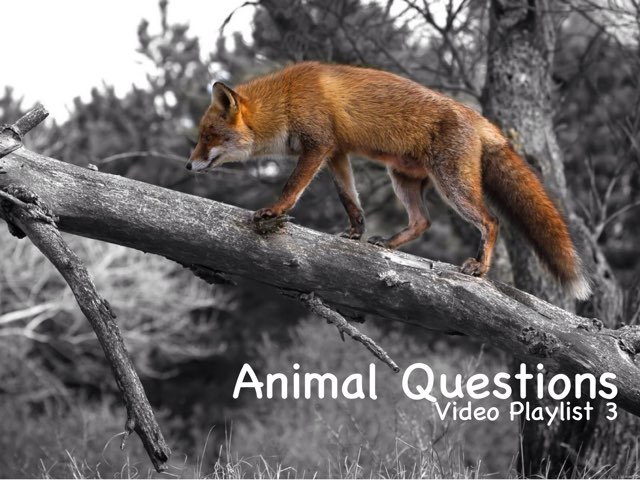 Animal Questions - Video Playlist 3 by Questions and Answers